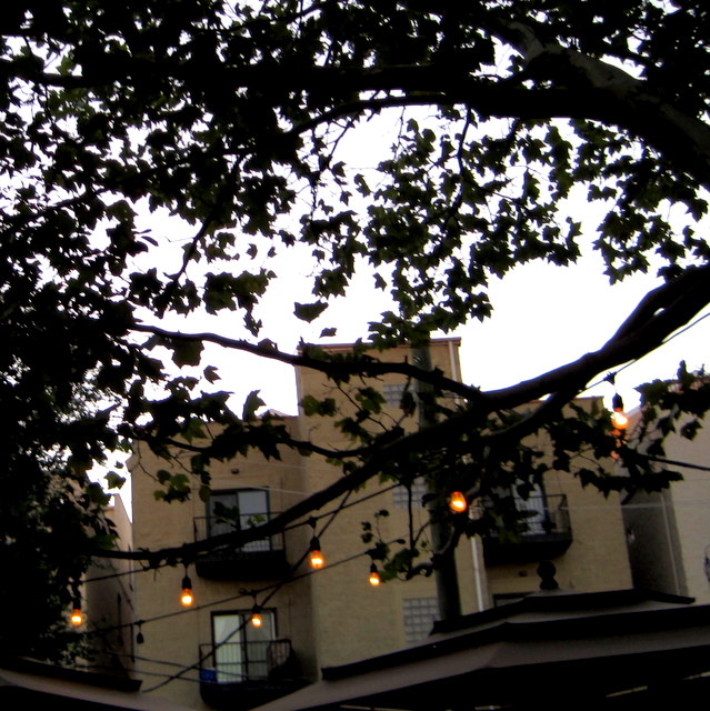 Tree canopy and lights on the lovely patio